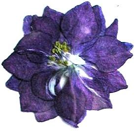 押し花素材 千鳥草 ブルー
