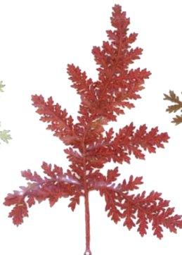 押し花素材 タチシノブ 赤